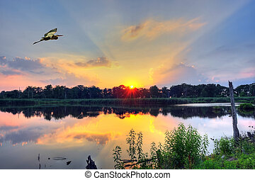 Sunset on a Chesapeake Bay pond - Blue Heron flys over a...
