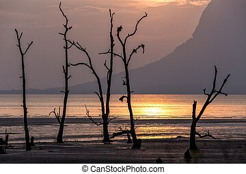 Sunset on a muddy tropical area