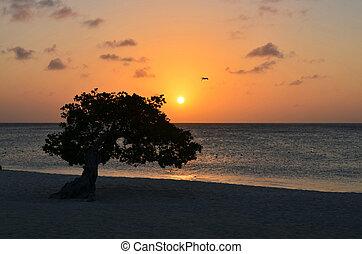 Sunset on Eagle Beach with Silhouette Watapana Tree