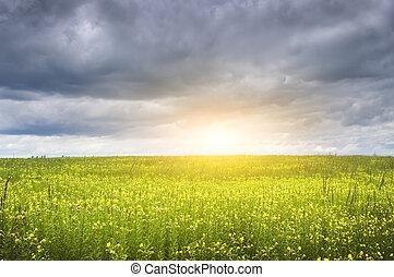 sunset on flower meadow.