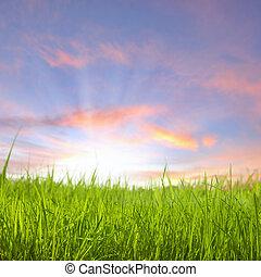 Sunset on grass field