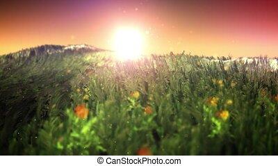 Sunset on magic grass field loop
