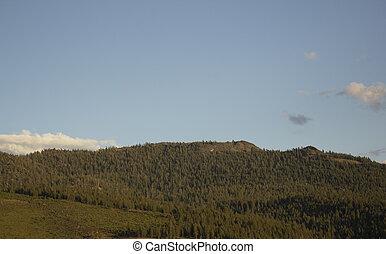 Sunset on pine tree mountains