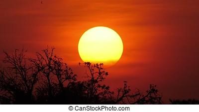Sunset on Savannah, Masai Mara Park in Kenya, Time Lapse 4K