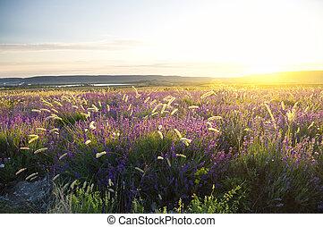 sunset on summer mountain meadow