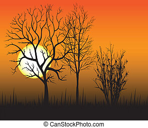 Sunset on the background of trees