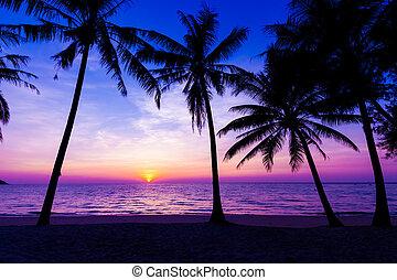 sunset on the beach. Sunset over the tropical beach - sunset...