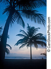 Sunset on the beach with palm tree