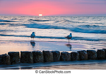 Sunset on the beach with seagulls sitting on the breakwater