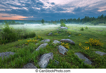 Sunset on the foggy meadow