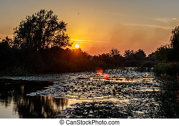 Sunset on the lake with water lilies and with trees in the background. Beautiful view of colorful and peaceful evening.