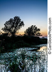 Sunset on the lake with water lilies, reeds and with trees in the background
