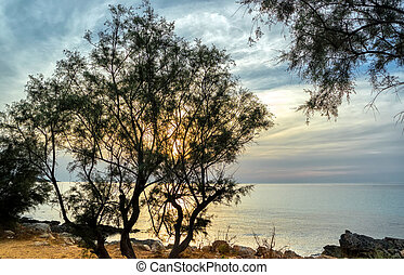 Sunset on the sea. The rocky coast of Mallorca and a pine on the shore.