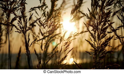 sunset on the sea with a sandy beach through tall grass swaying
