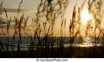 sunset on the sea with a sandy beach through tall grass...