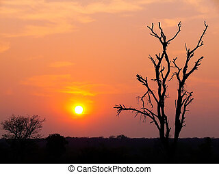 Sunset on the Zambezi River, Africa