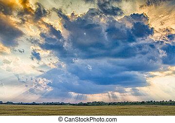 sunset on wheat field