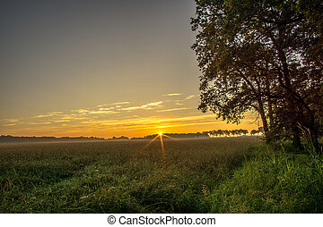 Sunset over a cereal field with trees in the background