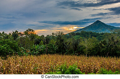Sunset over a field and mountain in