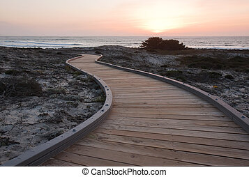 A walkway over sand dunes towards the ocean at Asilomar State Park near Pacific Grove, California, with with the setting sun and Monterey cypress trees (Cupressus macrocarpa) in the background. Monterey cypress is endemic to the central coast of California where relic populations persist in a few ...