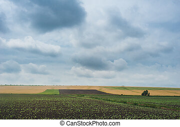 sunset over agricultural green field. Dramatic sky and clouds