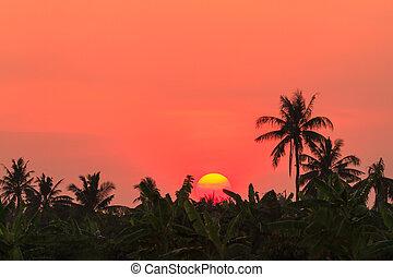 Sunset over banana farm