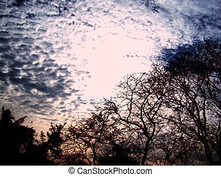 Sunset over Bare Trees