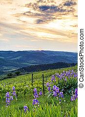 Sunset Over Chianti With Iris - Sunset in the Chianti region...