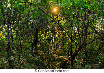 Sunset over dense forest
