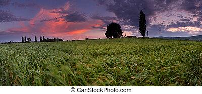Sunset over farm field in wind