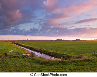 Sunset over Farmland in the Netherlands