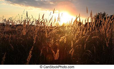 sunset over field at autumn