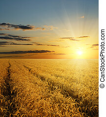 sunset over field with gold harvest