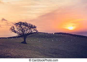 Sunset over field with sheep in the distance