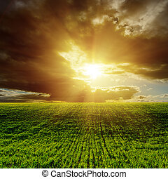 sunset over green agricultural field