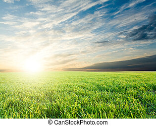 Sunset over green crops