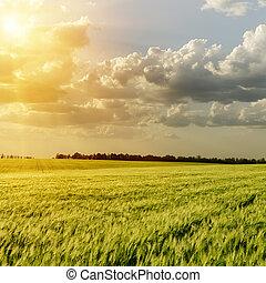 sunset over green field