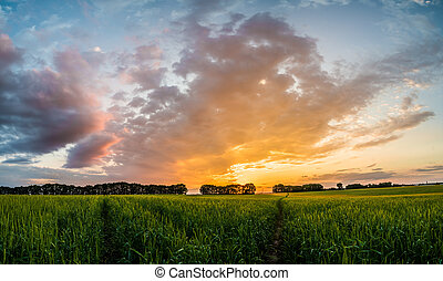 sunset over green field with road