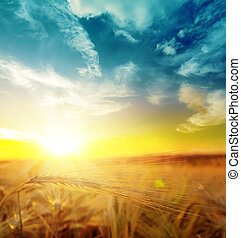 sunset over harvest field