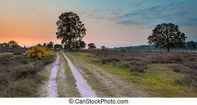 Sunset over Heathland on Utrechtse heuvelrug
