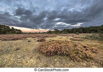 Sunset over heathland in Hoge Veluwe National Park in province Gelderland, the Netherlands