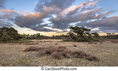 Sunset over Hoge Veluwe National Park in province Gelderland, the Netherlands