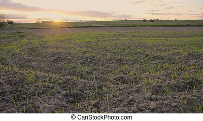 Horizontal panorama over empty field at beginning of spring during sunset