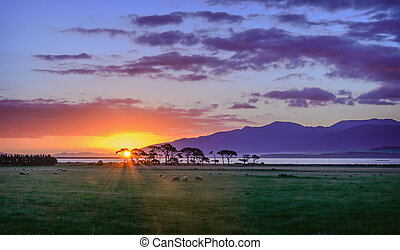 Purple sunset over New Zealand, Pacipic ocean and landscape with sheeps