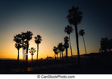 Sunset over palm trees in Santa Monica, California.