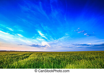 Sunset over rural countryside field