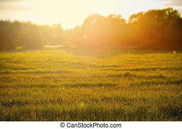 Sunset over rural grass field