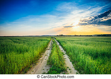 Sunset over rural road in green field