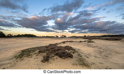 Sunset over sand dunes Hoge Veluwe