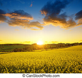 Sunset over spring landscape with rapeseed field